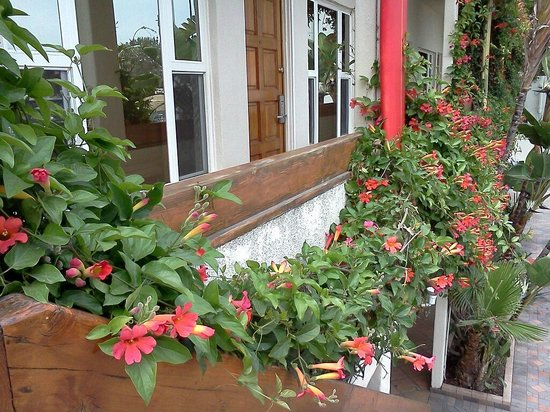 Hotel California: Trumpet Vines blooming! :)