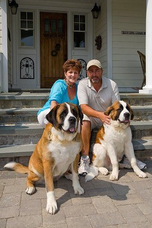 East Marion, NY: Daisy and McDuff, Our Saint Bernards