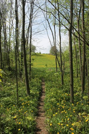Owen Sound, Kanada: A section of the Bruce Trail near Holly Cottage