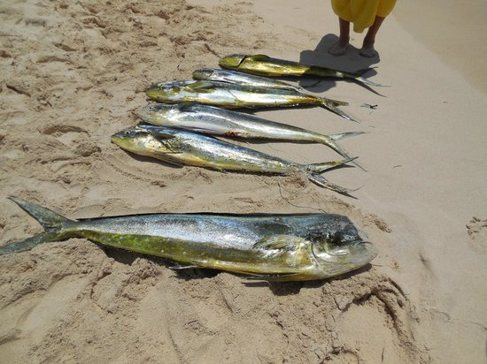 Oasis Tulum: fish caught just of the beach with local anglers that would take you out for a fee