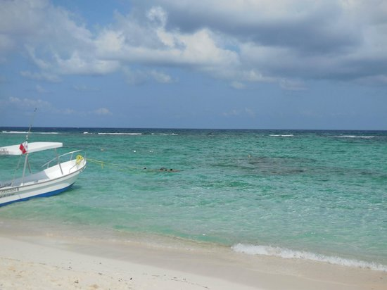 Oasis Tulum: Great snorkeling on protected beach. Many fish, Barracuda, Sea Turtles, Sting Rays