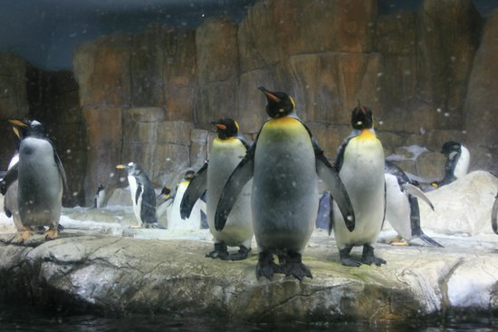 Henry Doorly Zoo: Penguins at the aquarium.