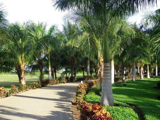 Hotel Riu Guanacaste: Some of the Grounds