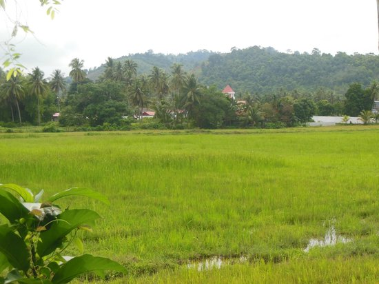 Pondok Keladi Guest House: One of the pleasant walks nearby around rice paddies