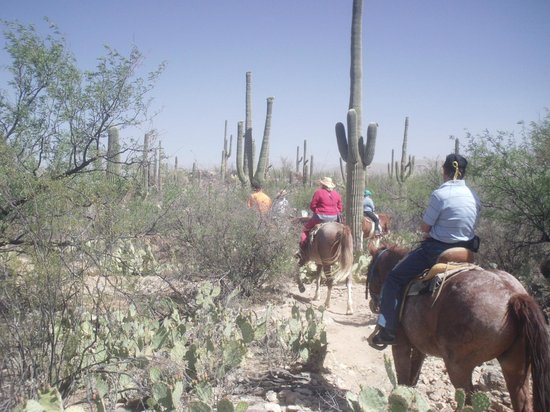 Tanque Verde Ranch: horseback riding