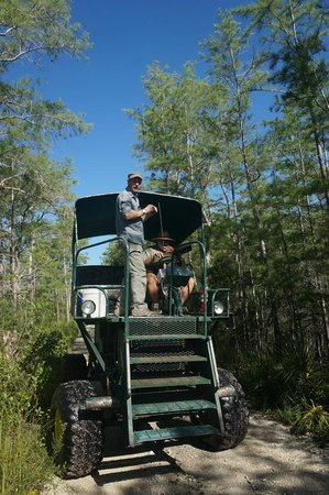 Everglades City, FL: The buggy is very comfortable and a fun ride.