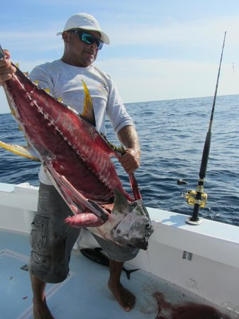 Quepos, Costa Rica: 90 lb yellow-fin filleted by first mate Greivin