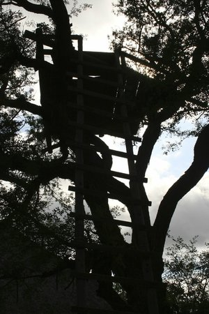 Toro Yaka Bush Lodge: Tree house/viewing platform