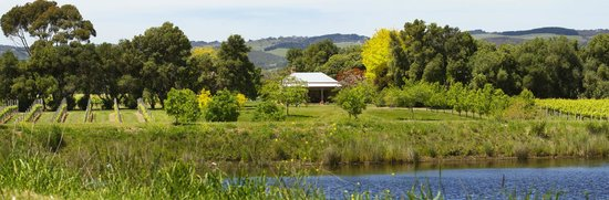 McLaren Vale, Australien: A panoramic view of the 19th Century Cellar Door cottage and surrounds.