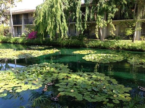 Ramada Limited Santa Barbara: duck pond