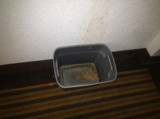Days Inn Neptune Beach: Next day after alerting the desk nothing was cleaned up! BIO HAZARD!