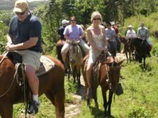 Coxen Hole, Honduras: roatan henry tour jungle horse back ride