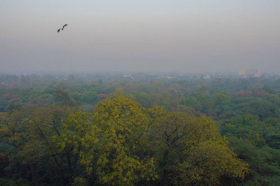 The Oberoi, New Delhi: View from room - Golf course side