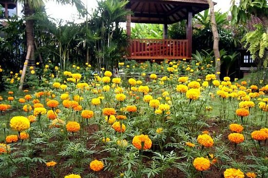 Yulia Village Inn: Marigolds Garden