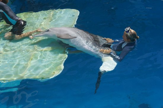 Photos Of Clearwater Marine Aquarium Clearwater
