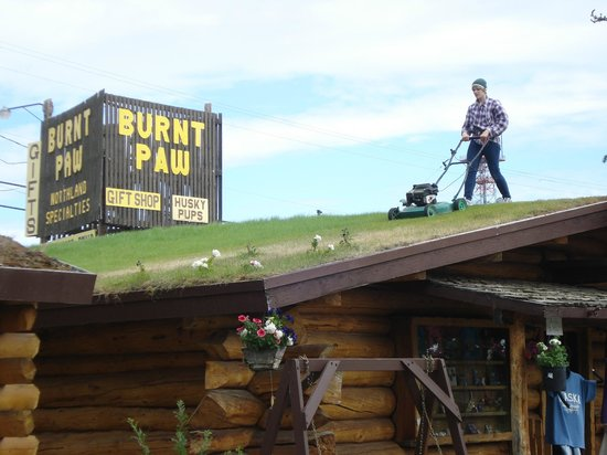 Tok, AK: Cabins have sod roofs and have to be mowed weekly