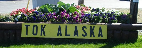 Tok, AK: Some of our beautiful flowers