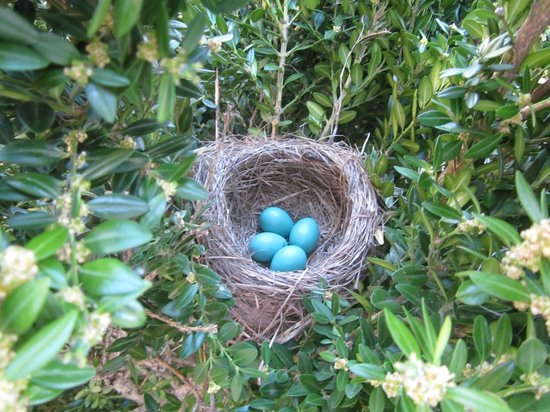 Marcotte's Family Motel: Robins' nest near front door