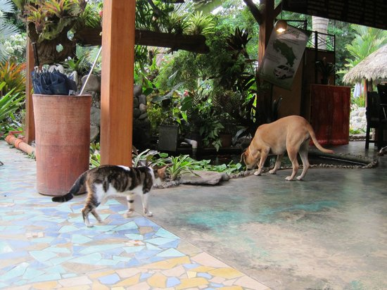 Hotel Banana Azul: Pups and kitties