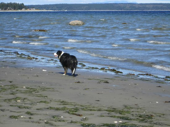 Savary Island, Καναδάς: Ricky on the beach
