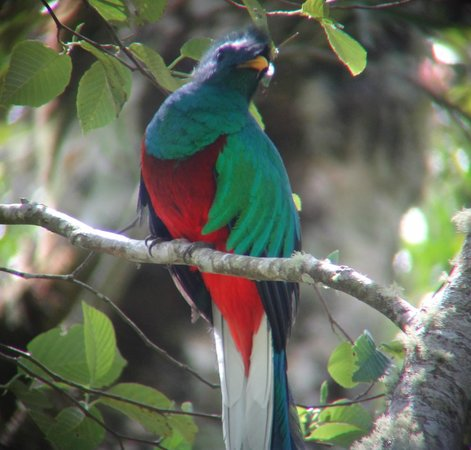 Province of Limon, Costa Rica: Quetzal