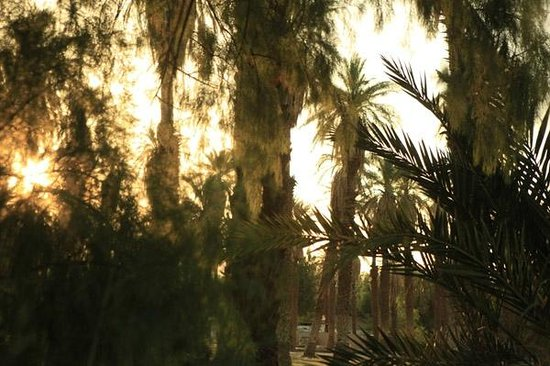 Furnace Creek Inn and Ranch Resort: Date Palm Oasis @ Furness Creek