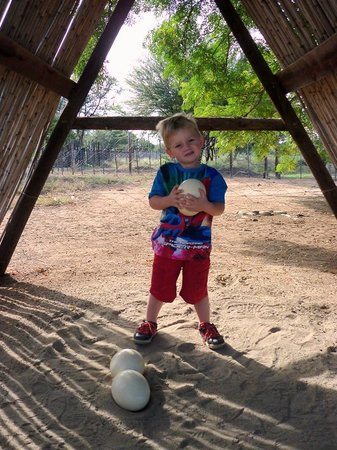 Oudtshoorn, Republika Południowej Afryki: Little boy holding a Ostrich Egg at Safari Ostrich Farm
