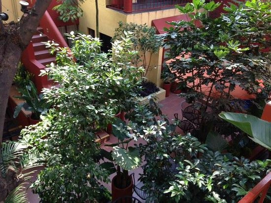 The Red Tree House: Courtyard