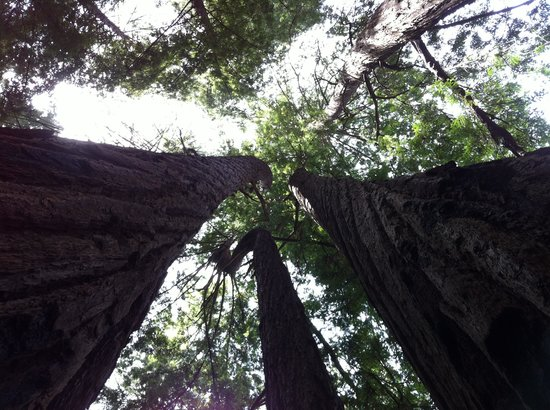 Ventana Inn & Spa: Redwoods Tan Bark Trail