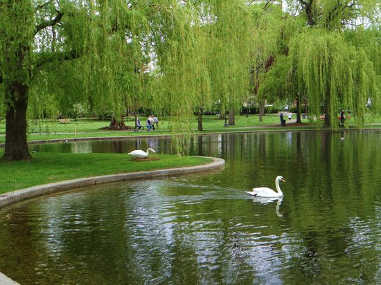 Call For Volunteers Friends Of The Public Garden Docent Program The Garden Club Of The Back Bay