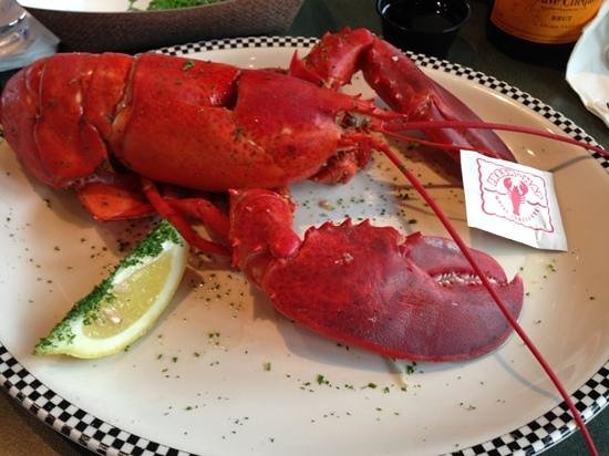 Bourne, MA: 1 1/2 lobster heaven