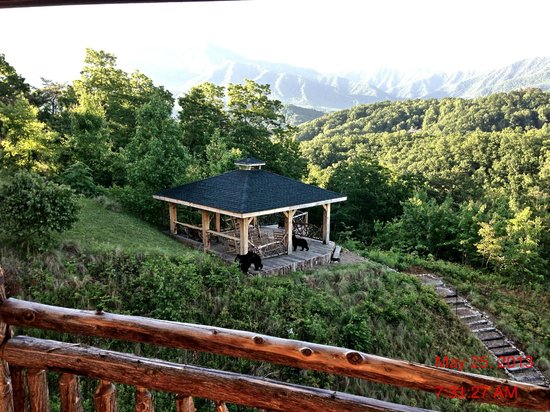 The Lodge at Buckberry Creek: Bears visiting the sunset overlook from our balcony #1
