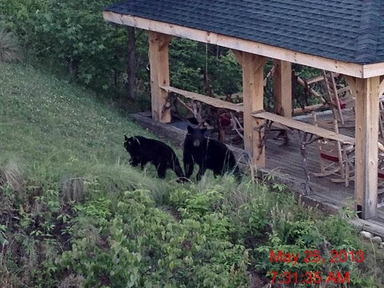 The Lodge at Buckberry Creek: Bears visiting the sunset overlook from our balcony #2