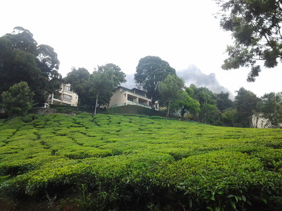 Club Mahindra Lakeview Munnar: the resort