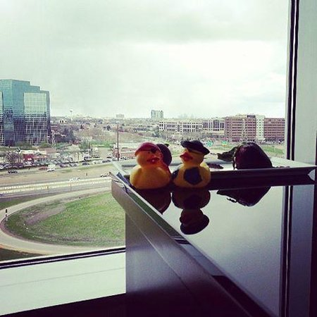 Hilton Minneapolis/Bloomington: Will and Jack. . nice view from the room