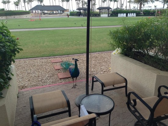 JA Jebel Ali Golf Resort: Ground floor room patio