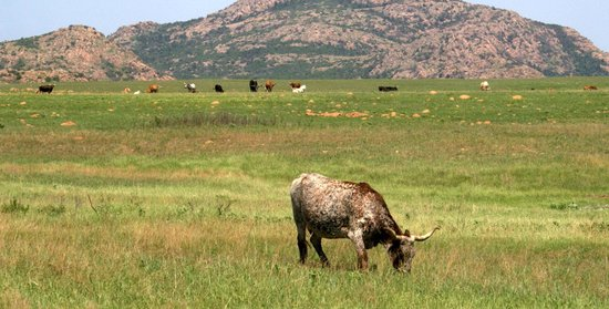 Hotels Near Wichita Mountains Wildlife Refuge