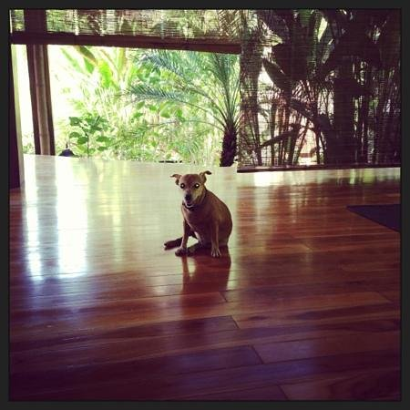 Pranamar Villas and Yoga Retreat: yoga dog