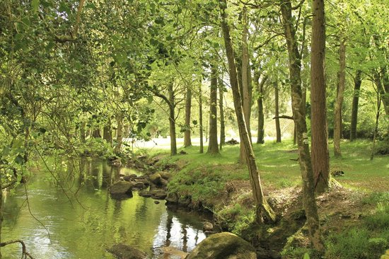 Gidleigh Park Hotel: Beautiful Dartmoor river running through the grounds