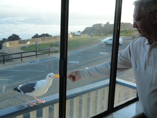 Borg's Ocean Front Motel: feeding seagulls from the room