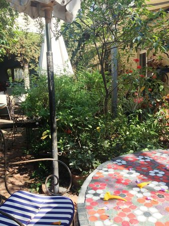 Fitzroy, Australia: The lovely garden