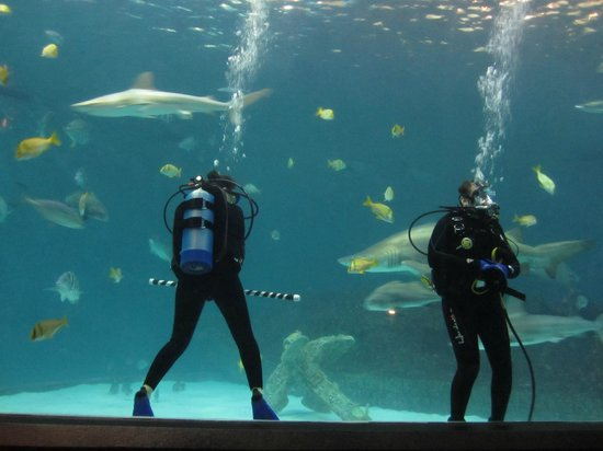 Divers In Shark Tank