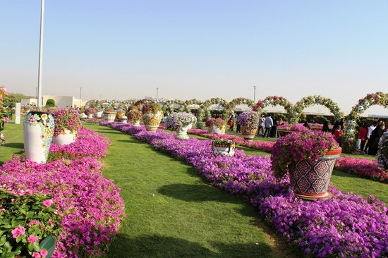 Photos of Miracle Garden, Dubai