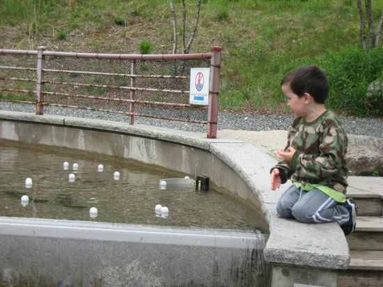 Norwich, VT: Water and ping pong ball fun