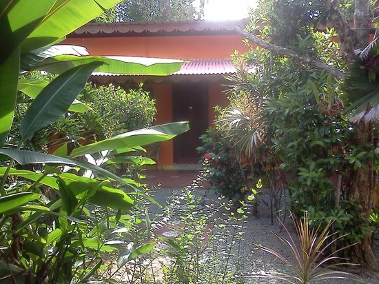 Pondok Keladi Guest House: the walk to my room.  it's great to wake up to so much green