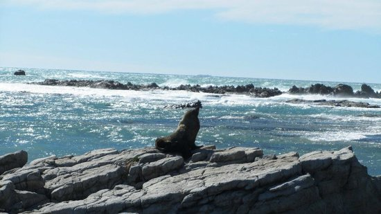 Kaikoura, New Zealand: The seals were enjoying the wind and the sun