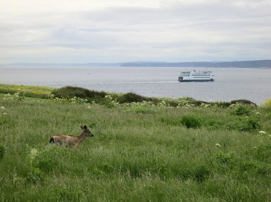 Coupeville, WA: Deer and ferry