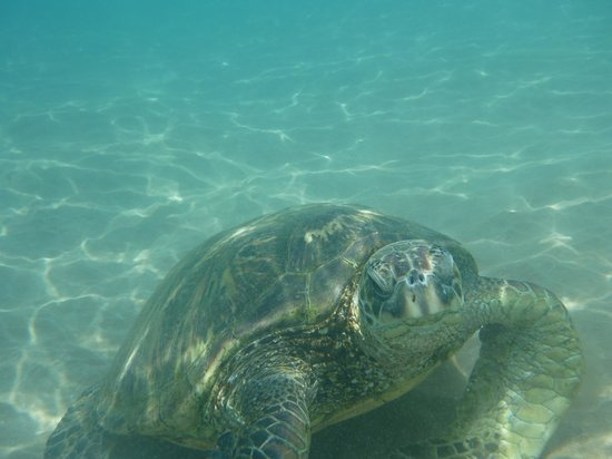 Makena, HI: This guy was hanging out close to shore