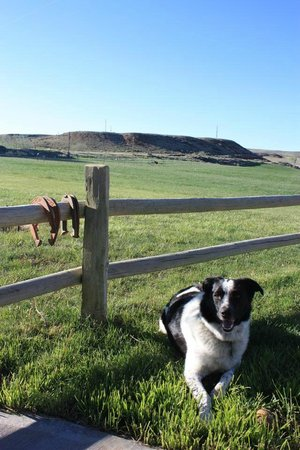 K3 Guest Ranch Bed & Breakfast: Divot the Dog