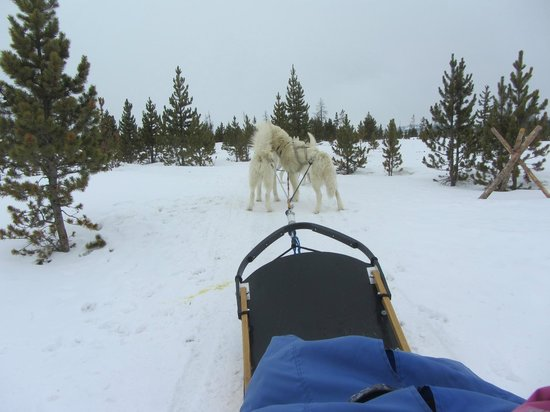 Fraser, CO: Dog sledding